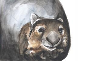 Wombat Sketch, 2014 Watercolour on 190gsm acid free paper Image size 27.8 cm x 21 cm NFS