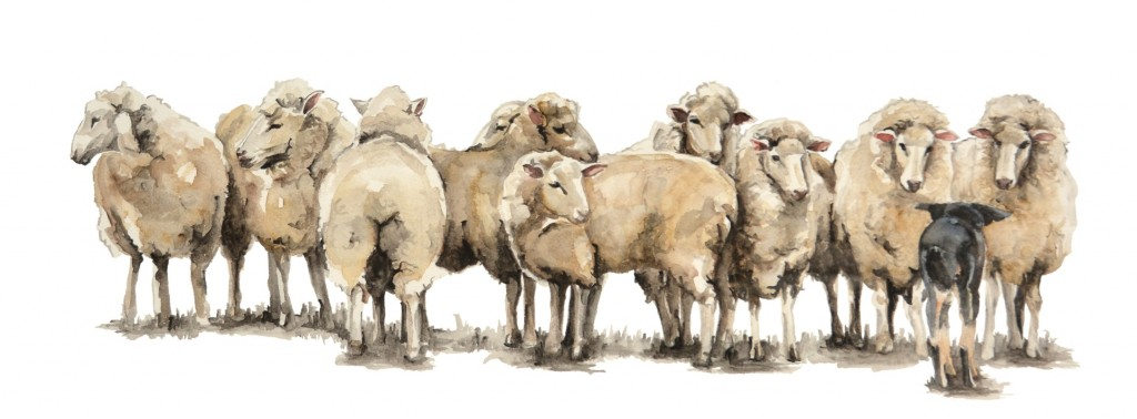 SheepEditWhiteBackgroundSmall