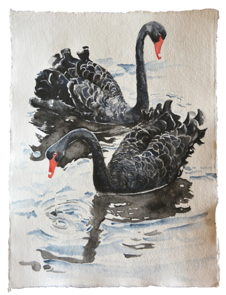 BlackSwansEditSmall